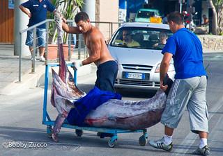 Naples catch