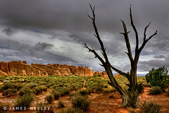 Standing Alone (James Neeley) Tags: landscape utah arches hdr lonetree 5xp jamesneeley flickr23