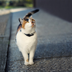 8/30: Pika (next_in_line) Tags: white cat square 50mm ginger kitty f18 apsc