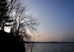 in the 705 (dmixo6) Tags: winter nature cottagecountry muskoka dugg dmixo6