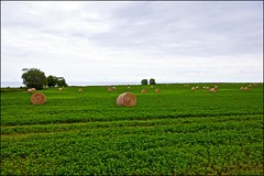 Hay Field Over Lake Ontario (Jeannot7) Tags: field clouds round hay lakeontario bales porthope rotobale haybalestubble