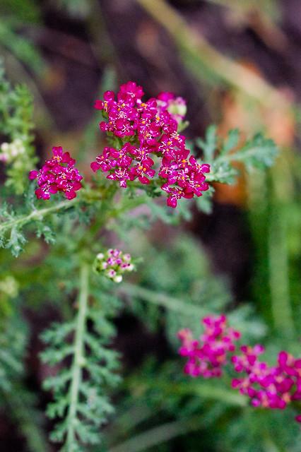 nikon - garden week three-0544