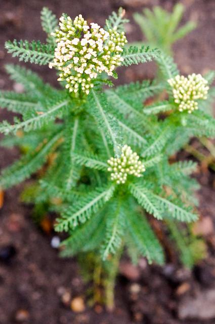 nikon - garden week three-0532