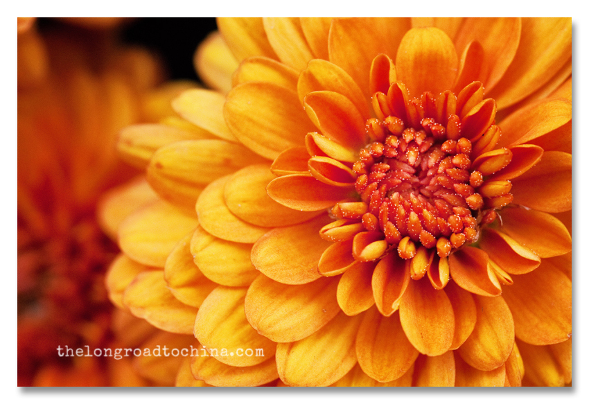 Orange Mum BLOG