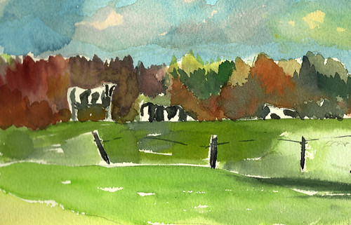 Cows at Emergo Farm, Danville, Vermont