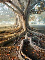 Roots (Z Snchez) Tags: tree canon arbol photography photo sevilla spain arboles photographer cuento fairy mystical raiz raices rooth  rooths    zusanchez beautifulautumntrees