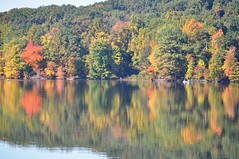 My favorite time of year! (bjebie) Tags: autumn trees ohio lake reflection fall water leaves reflections boats boat shore ripples boaters mogadorereservoir