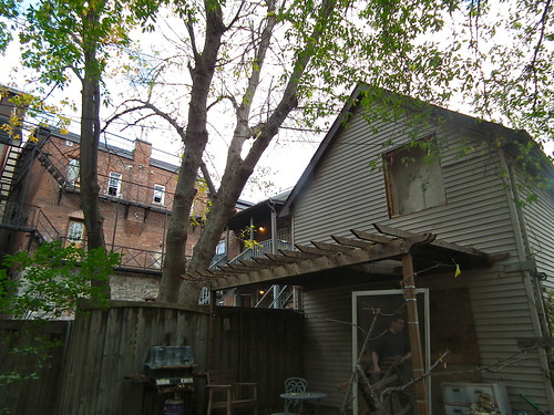 back of house and one doomed tree