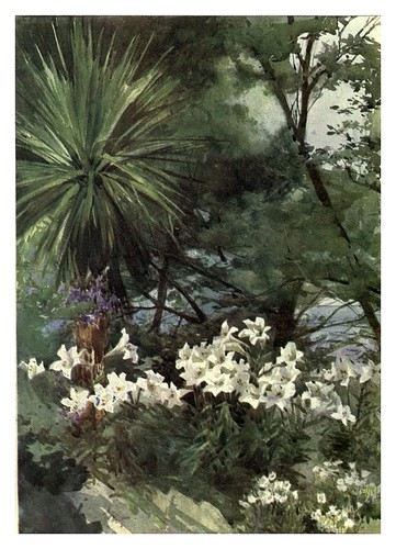 020-Lilium Longiflorum y Cordyline en Dublin- Flower grouping in English, Scotch & Irish gardens 1907- Margaret Waterfield
