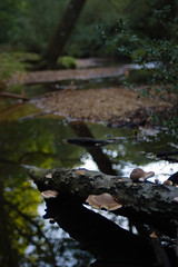 Ober Water (Skink74) Tags: uk morning autumn england reflection tree 20d water river dof bokeh hampshire canoneos20d fallen fungus meander newforest damp oberwater nikkor35f14 nikkor35mm114ai