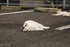 cats_2011-10-23_9