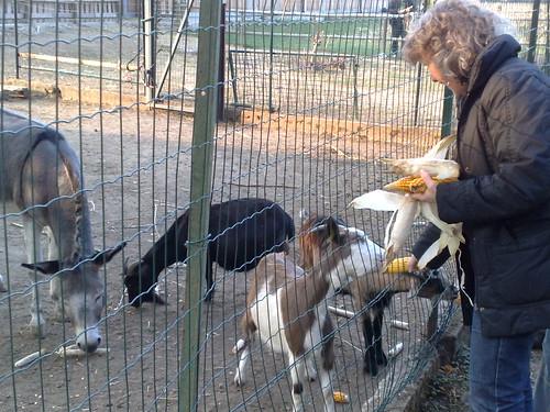Cibo per gli animali by durishti