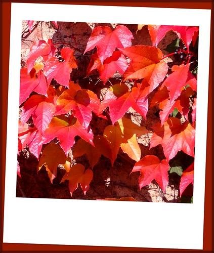 Fall Greetings by Ginas Pics