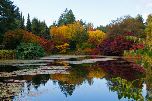 Autumn in Van Dusen Garden