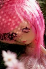 pink fluff #03