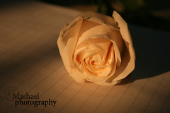 (I am Mashael) Tags: flower canon notebook 400d