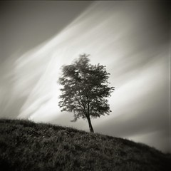 Autumn Breeze (Eye) Tags: longexposure holga hokkaido fujifilm acros100 nd400 nd8x2 240seconds