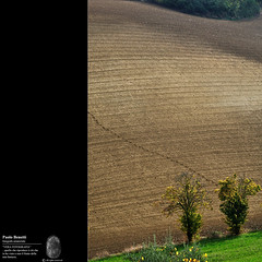 orme (paolo.benetti) Tags: nikon italia albero collina orme romagna forlì d300 orma grisignano sailsevense