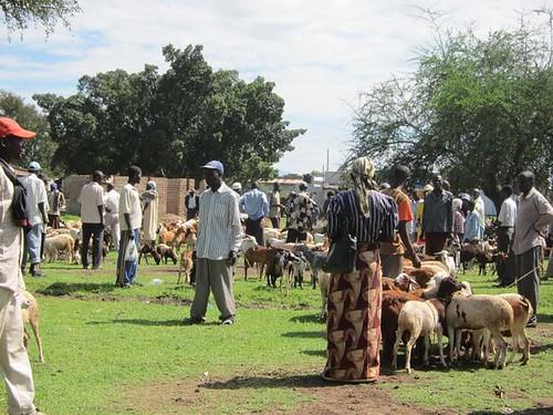 animal market kisumu kenya