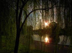 Constitution Gardens Sunrise Through Willow (photoranger54) Tags: reflection pool gardens mall dc washington memorial district columbia national constitution hdr