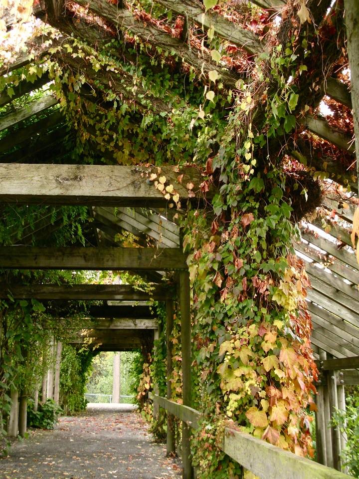 ubc botanical garden 001