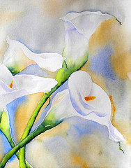 Callas - detail (Cristina Dalla Valentina) Tags: flowers flower watercolor painting calle calla paintings watercolour callas watercolors watercolours callalilies watercolorpainting dallavalentina