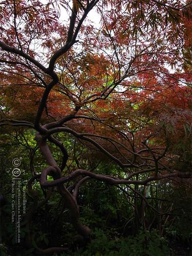 Bonjour Giverny~ 吉維尼 Jardins de Monet 莫內花園R1041475