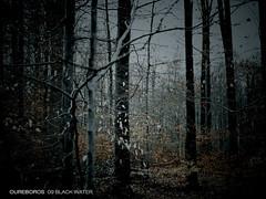 oureboros act260-10 (s.alt) Tags: autumn plants tree nature forest germany dark grey design leaf cd herbst wald schwarzwald blackforest antzen natureunveiled wwwantzencom oureboros wwwoureboroscom act260