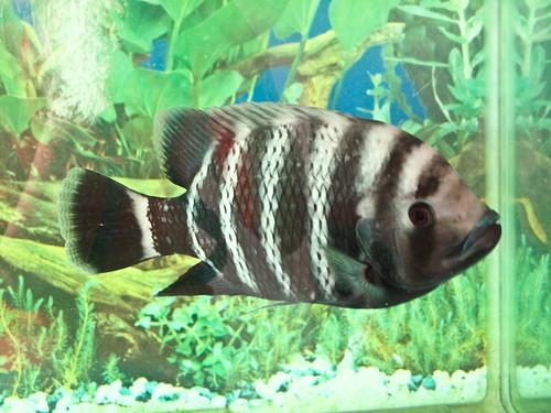 IMG_0204 Fish