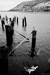 wharf no more (gordjohnson) Tags: ocean seagulls water downtown stjohns wharf harbourfront nl