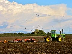 bird brunch (Black Cat Bazaar) Tags: california sky tractor field birds clouds chico plowing snacking nord