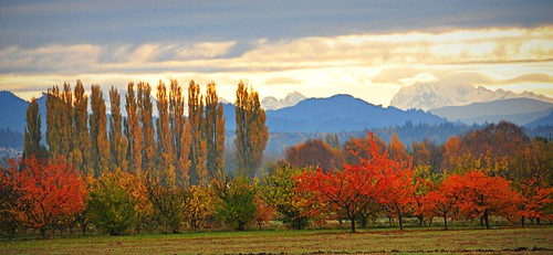 11-10-11 Fall Layers by roswellsgirl