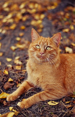 The Autumn colors III (~ Jessy Simon ~) Tags: autumn orange cats brown tree cute love colors animal animals fauna cat automne ginger chats nikon kitten chat bokeh couleurs adorable kitty mycats nikkor50mmf18 animaux marron arbre roux mignon faune d5000 meschats