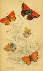 5butterflies3
