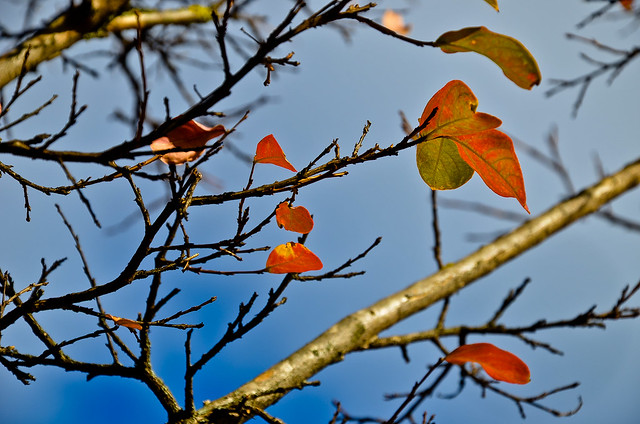 otoño 12