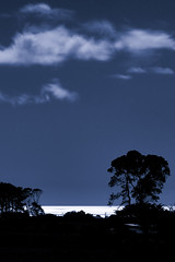 moonlit seascape (dcysurfer / Dave Young) Tags: ocean newzealand tree silhouette clouds fullmoon moonlit moonlight tasmansea okato ef100400mmf4556lisusm canoneos50d dcysurfer ccby40