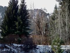 Hallam Lake Winter 2011