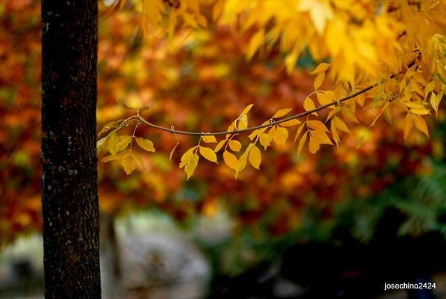 Detalles del otoño