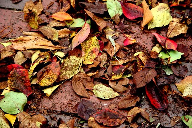 grungy leaf
