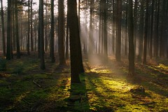 Light of the forest (Johan_Leiden) Tags: trees light netherlands forest moss rays noordbrabant hilvarenbeek