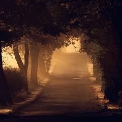Dark alley (warmianaturalnie) Tags: road morning trees light sun sunrise dark landscape photography alley passion droga aleja poranek warmia drzewa wschód my