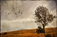 Giving Thanks (James Neeley) Tags: thanksgiving landscape holidays idaho givingthanks jamesneeley ruralidaho texturedimage flickr23 cgimprov