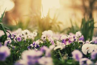 garden scenes in spring