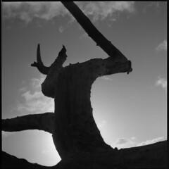 scary (benjamin vitamin) Tags: newzealand blackandwhite bw cloud tlr film beach nature silhouette statue clouds square coast blackwhite scary driftwood wellington aotearoa ilford yashica contrejour twinlensreflex yashicad makara ilfordfp4plus fp4plus makarabeach parodinal epsonv600