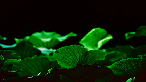 Spiritual Dream Interpretation: What It Means To Dream About Lotus ...