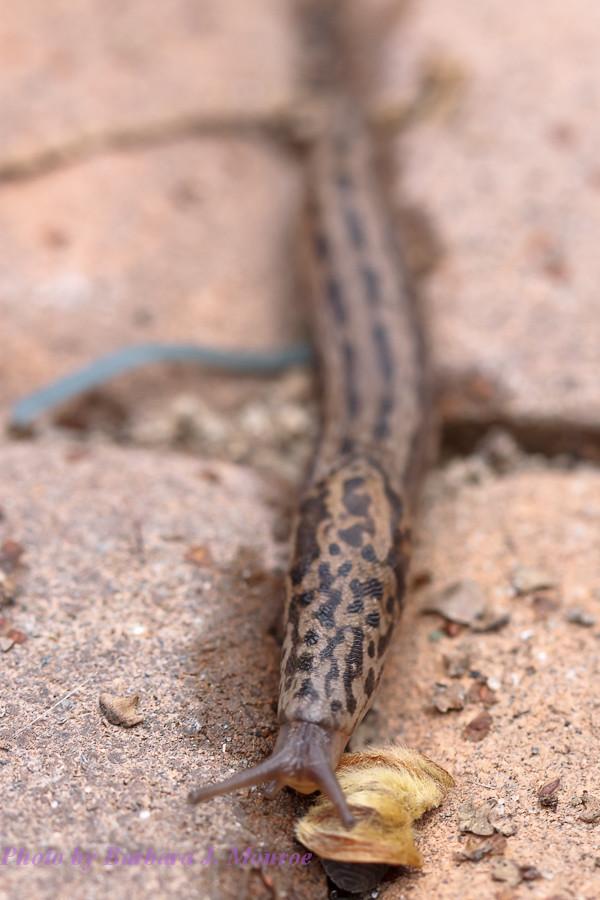 Slug (1 of 2)