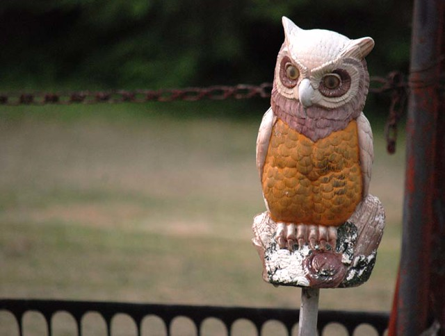 houseOwl