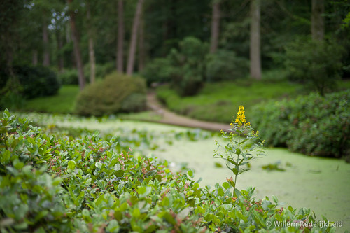 Heathgarden in Driebergen