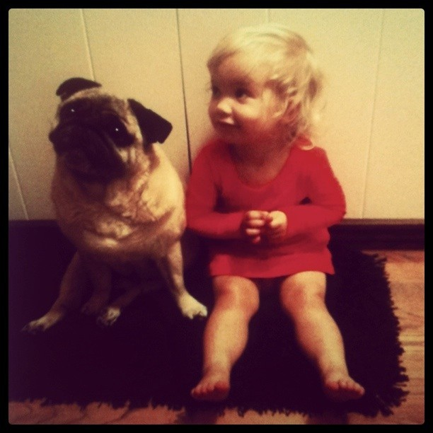 cute dogs, cute babies, Two little munchkins sittin' on a rug. #pug #Delilah @the818 @scottyshanahan