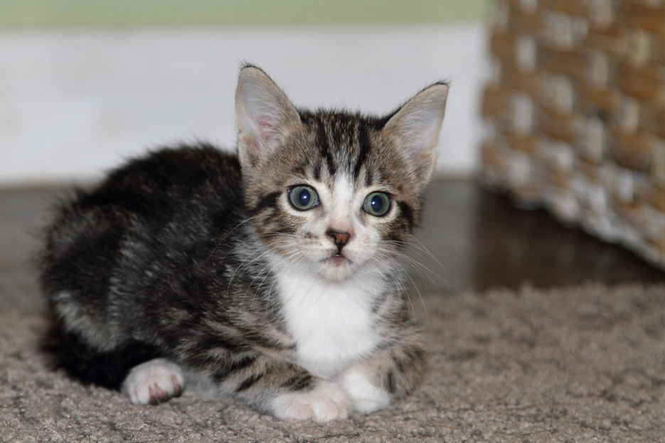 100111_kittens01